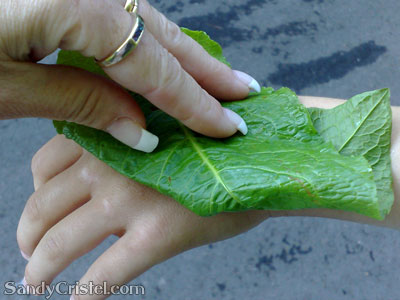 Treating nettle rash with a Dock Leaf